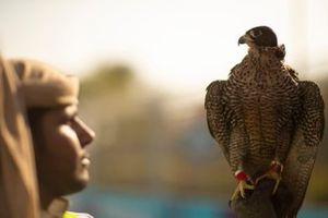 Un fauconnier