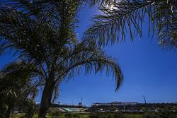 Palmeras cerca del circuito de Interlagos