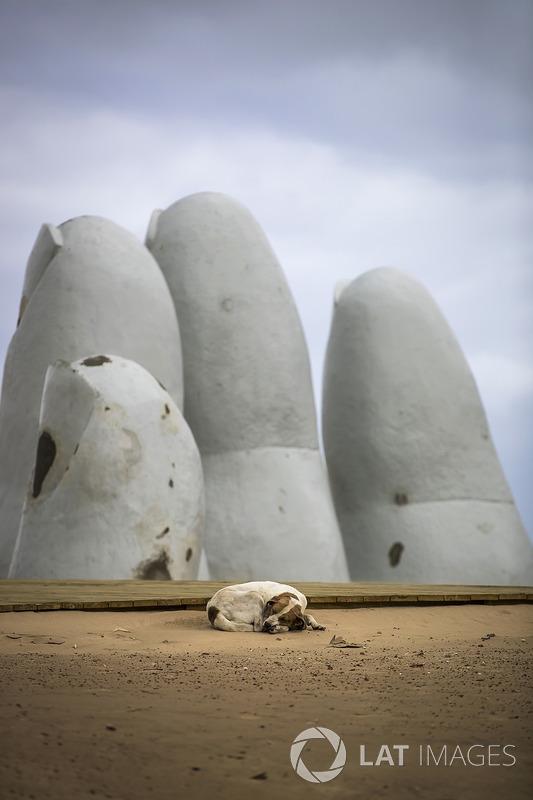 Un perro callejero duerme frente a la escultura La Mano