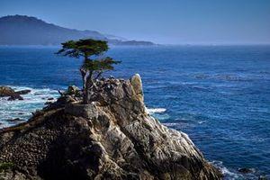 17 Mile drive, Carmel California, Lone Cypress