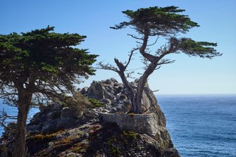 17 Mile drive, Carmel California, Lone Cypress