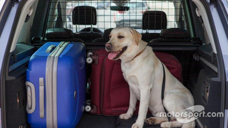 Un perro viajando en coche