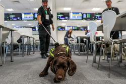 Полицейская собака-ищейка
