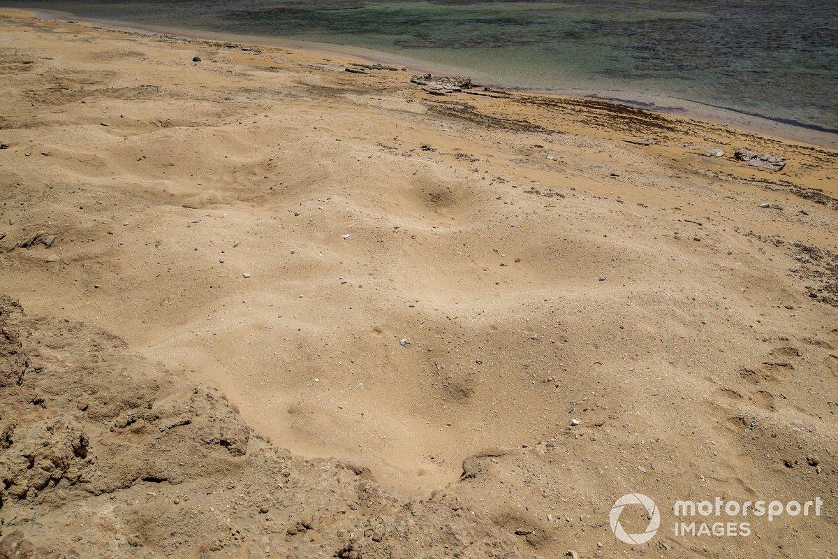 Nidos de tortugas en la playa
