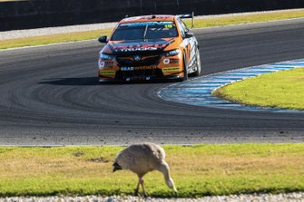 Jack Le Brocq, Tekno Autosports Holden with a bird on the track side