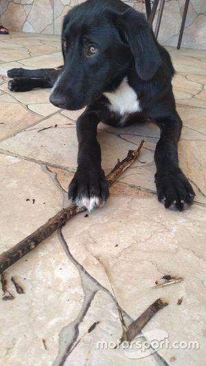 Bob, cachorro de Nelsinho Piquet