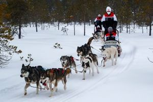 Sebastien Ogier, Elfyn Evans, Kalle Rovanpera and Takamoto Katsuta of Toyota Gazoo Racing are seen taking Husky Sled ride