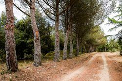 Rally Sardegna atmosphere