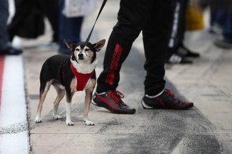 Un chien dans les stands pendant la séance d'autographes