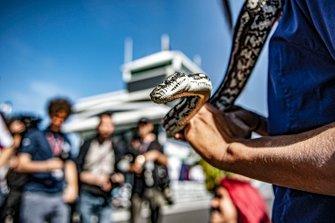 Serpente al GP d'Australia