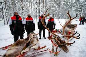 Sebastien Ogier, Elfyn Evans, Kalle Rovanpera and Takamoto Katsuta of Toyota Gazoo Racing are seen with Reindeer
