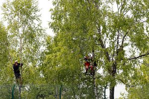 Fans climb a tree for a better vantage point