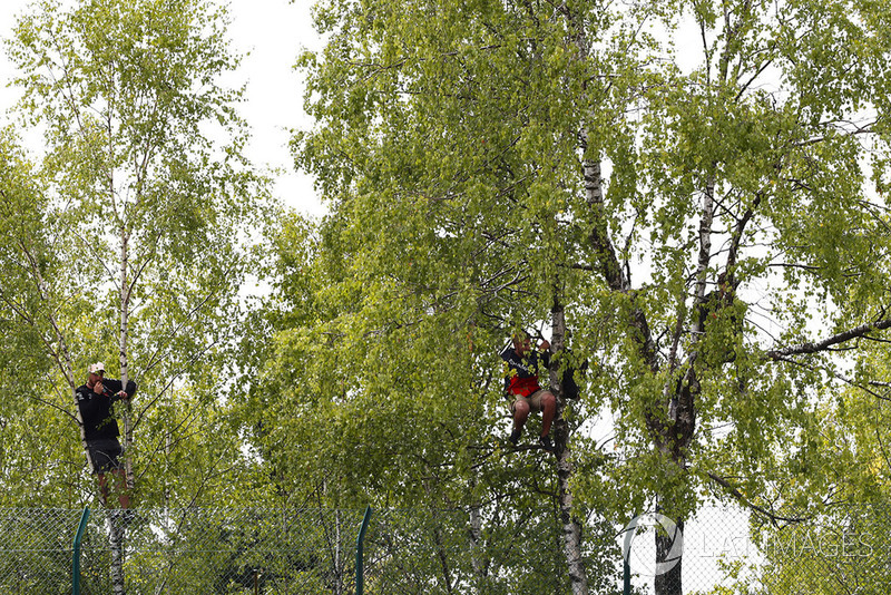 Kibic wspina się na drzewo