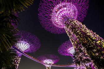Supertree Grove in Singapur
