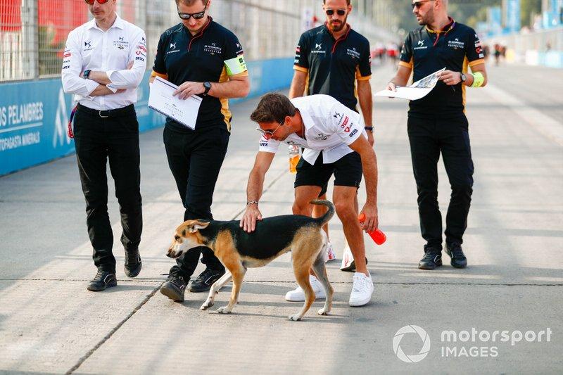 Antonio Félix da Costa, DS Techeetah, DS E-Tense FE20 acaricia a un perro callejero