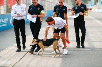 Antonio Felix da Costa, DS Techeetah, DS E-Tense FE20 strokes a stray dog