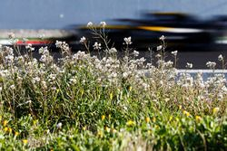 Carlos Sainz Jr., Renault Sport F1 Team RS18, speeds past some flowers