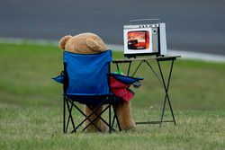 Teddy bear observa la carrera