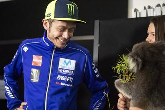 Valentino Rossi, Yamaha Factory Racing, mit Koala