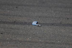 Brokken van Valtteri Bottas, Mercedes AMG F1 W10