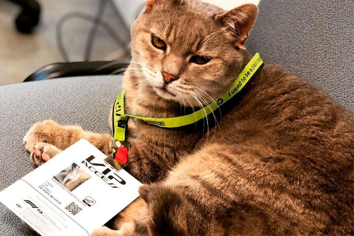 El gato de Imola, sede del GP de Emilia Romagna de F1