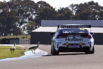 Jamie Whincup, Triple Eight Race Engineering Holden ve pistte kuşlar