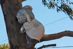 Un oso koala del Mercedes AMG F1