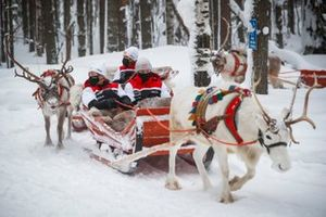 Sebastien Ogier, Elfyn Evans, Kalle Rovanpera and Takamoto Katsuta of Toyota Gazoo Racing are seen taking Reindeer Sled Ride