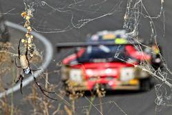 №12 Competition Motorsports powered by Ice Break, Porsche 991 GT3 R: Дэвид Колверт-Джонс, Патрик Лон