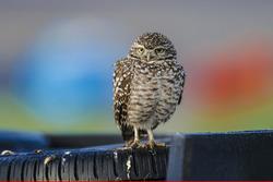 Een vogel bekijkt de actie
