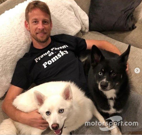Jenson Button com Rogue e Storm. O campeão da F1 em 2009 também tem outro cachorro chamado Bentley