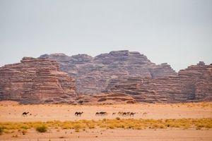Landscape with camel