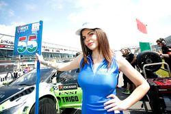 Chica de la parrilla para Ferenc Ficza, Honda Team Zengo, Honda Civic WTCC