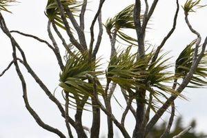 Wind auf Phillip Island