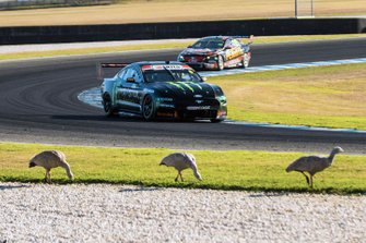 Cameron Waters, Tickford Racing Ford with birds on the track side