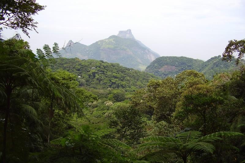 Rio Motorsport verspricht Umweltschützern 700.000 neue Bäume