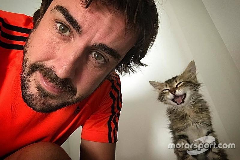 Журналисты провели расследование, чтобы узнать кличку котенка Алонсо