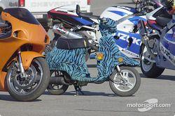 Furry ride