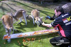 Visita al zoológico de Melbourne: Paul Stoddart alimentando a los canguros