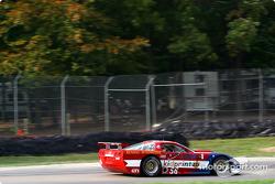 GT1 class qualifying: Tom Sloe