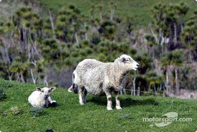 Rally Nueva Zelanda