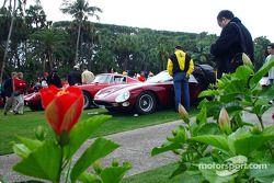 Line of Ferrari 250 Series cars