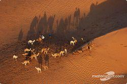 L'état sauvage dans le désert