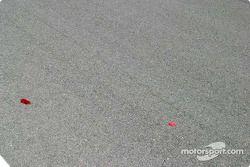 Des plumes sur la piste avant la course (Seulement à Vegas !)