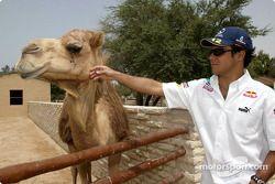 Felipe Massa visite le parc Al-Areen à Sakhir
