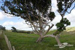Des arbres en Nouvelle-Zélance
