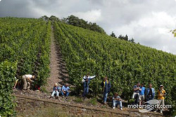 Spectators find good vantage points from the vineyards