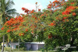 Un arbre en fleu