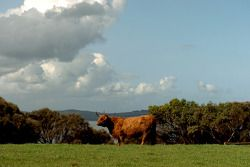 Churchill, Phillip Island