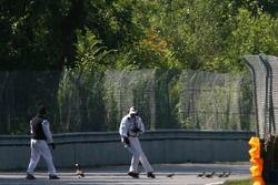Session stoppée pour permettre à une famille de canards de traverser la piste